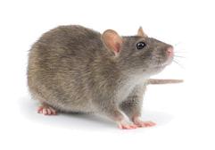 der Kosenamen Maus und seine Bedeutung