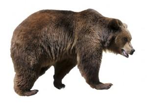 Der Kosename Bär und seine Bedeutung